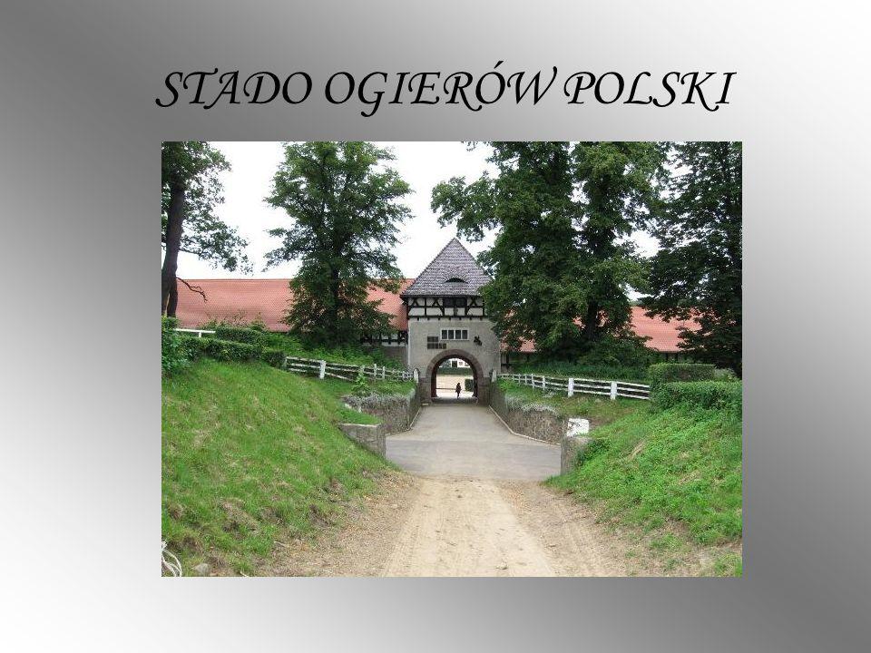 STADO OGIERÓW POLSKI