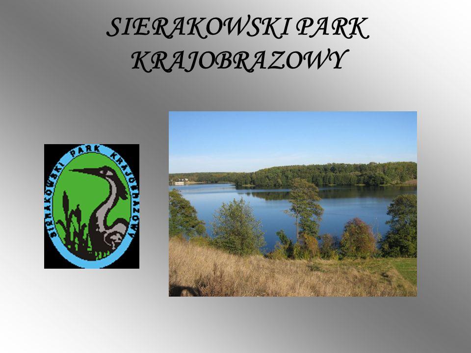 Sierakowski Park Krajobrazowy powstał w 1991 roku obejmując powierzchnię 30 413 ha w części zachodniej województwa wielkopolskiego.