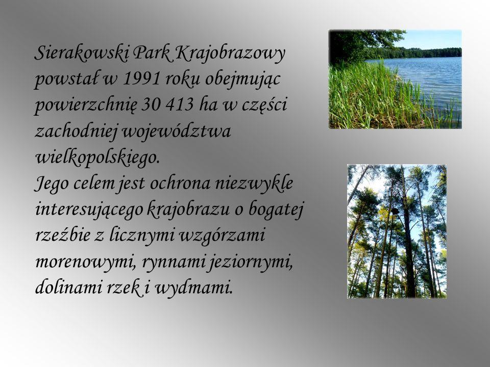 Sierakowski Park Krajobrazowy powstał w 1991 roku obejmując powierzchnię 30 413 ha w części zachodniej województwa wielkopolskiego. Jego celem jest oc