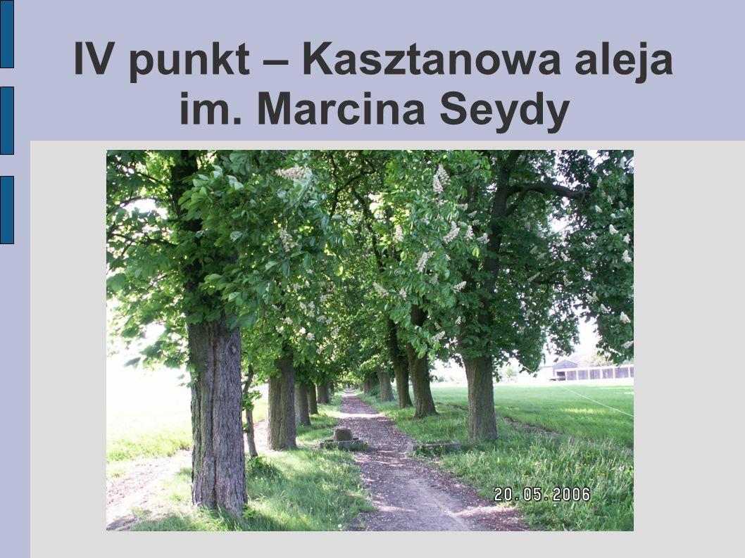 IV punkt – Kasztanowa aleja im. Marcina Seydy