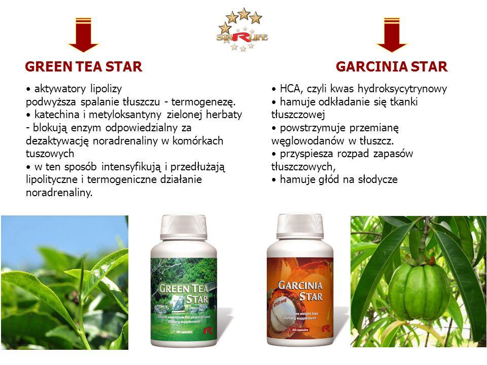 GREEN TEA STAR aktywatory lipolizy podwyższa spalanie tłuszczu - termogenezę. katechina i metyloksantyny zielonej herbaty - blokują enzym odpowiedzial
