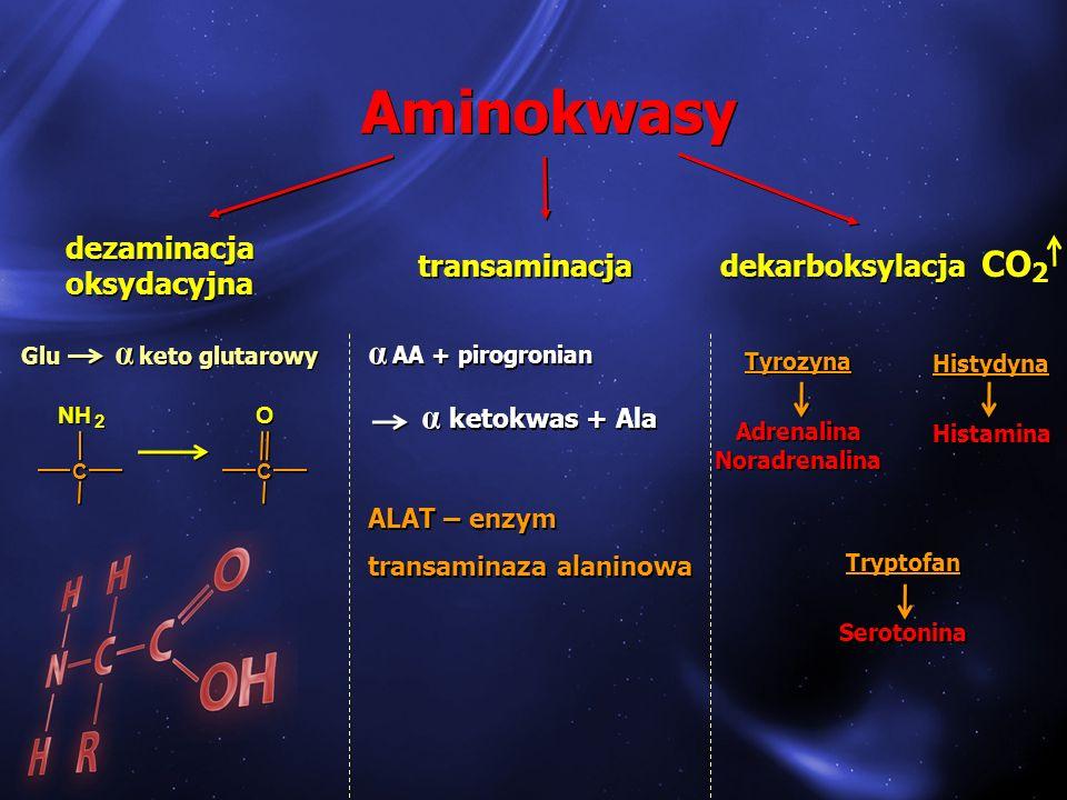 Aminokwasy Glu α keto glutarowy α AA + pirogronian α ketokwas + Ala ALAT – enzym transaminaza alaninowa α AA + pirogronian α ketokwas + Ala ALAT – enz