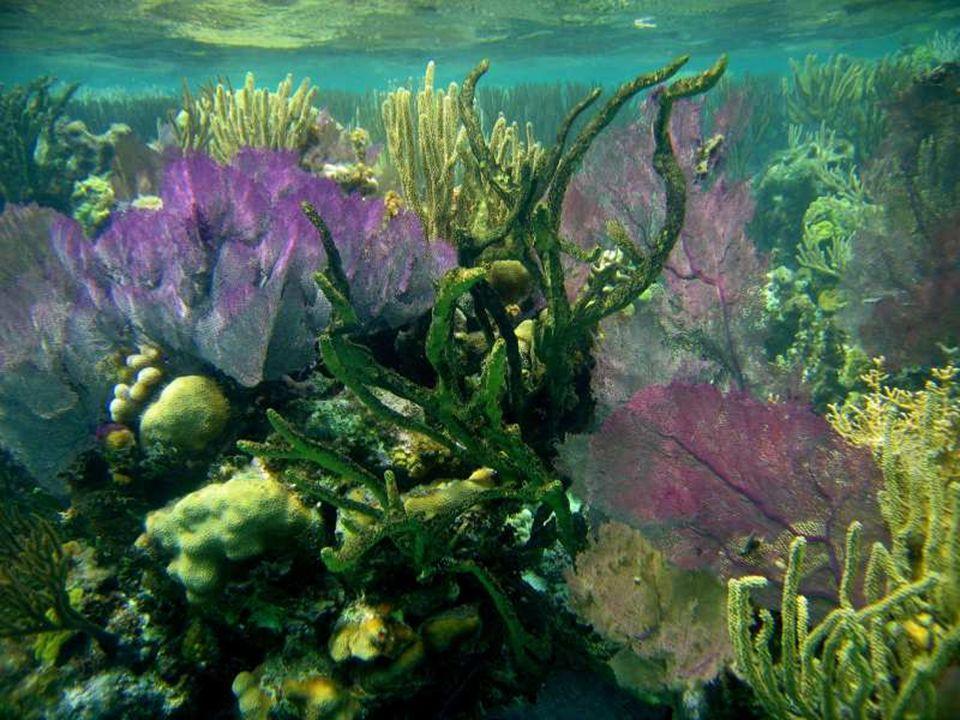 Przejrzyste wody wokół pierścienia rafy świetnie się nadają do nurkowania z rurką
