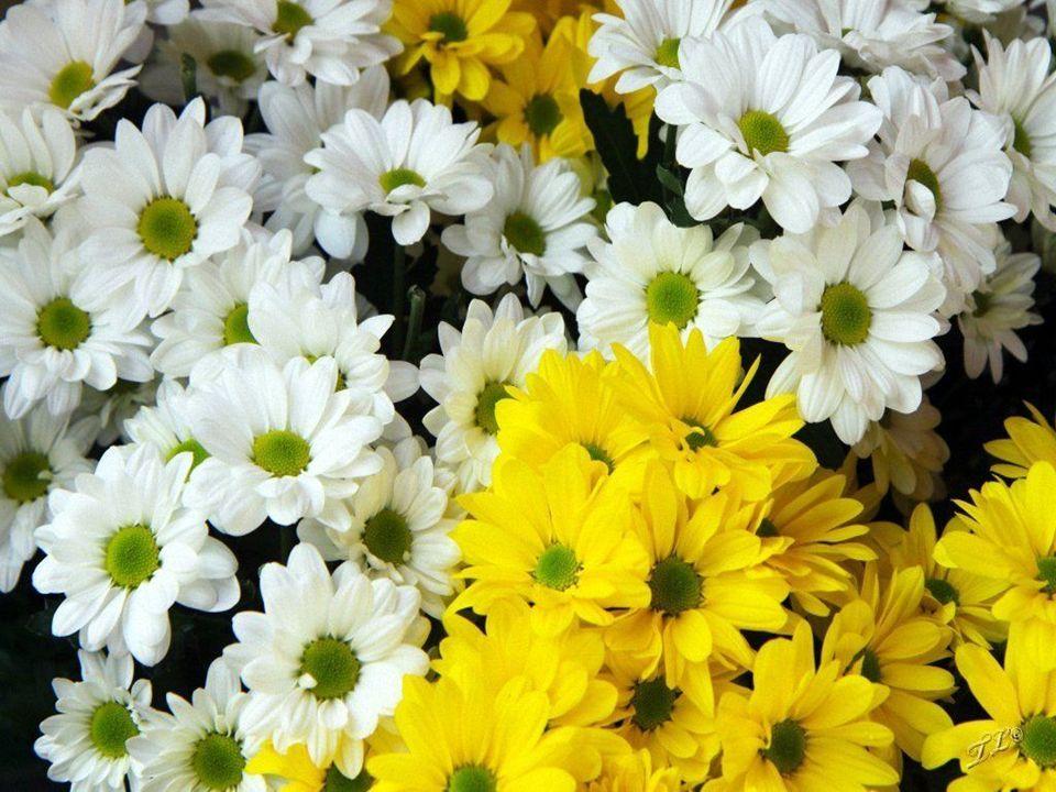 Toruńskie stragany kwiatowe przy Ratuszu