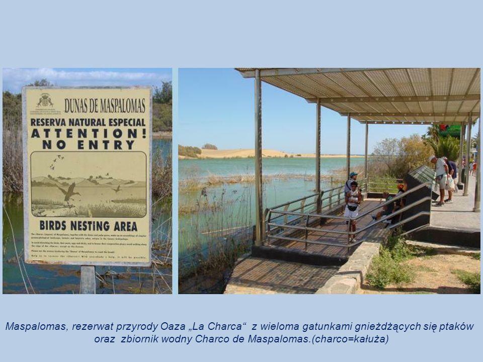 Maspalomas, rezerwat przyrody Oaza La Charca z wieloma gatunkami gnieżdżących się ptaków oraz zbiornik wodny Charco de Maspalomas.(charco=kałuża)