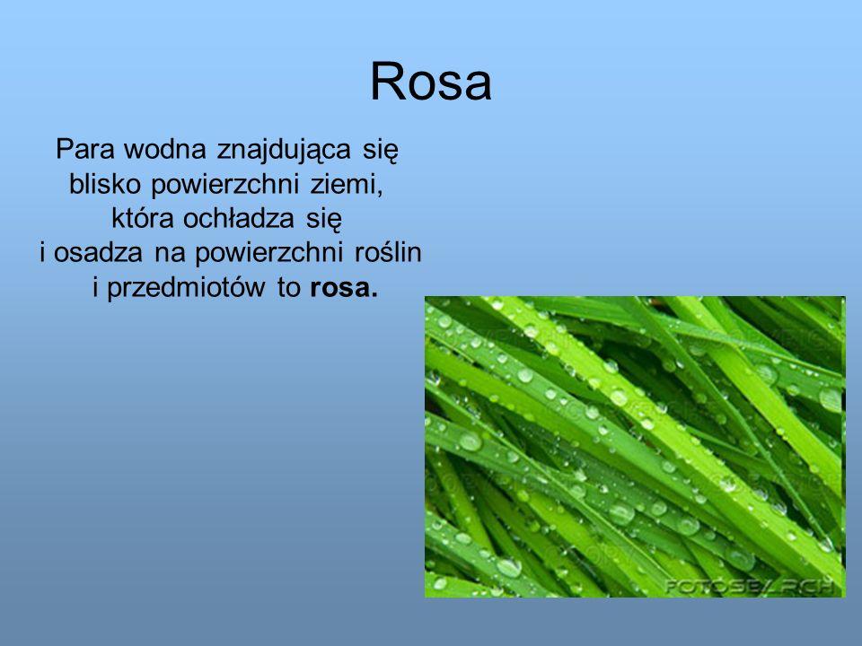 Rosa Para wodna znajdująca się blisko powierzchni ziemi, która ochładza się i osadza na powierzchni roślin i przedmiotów to rosa.