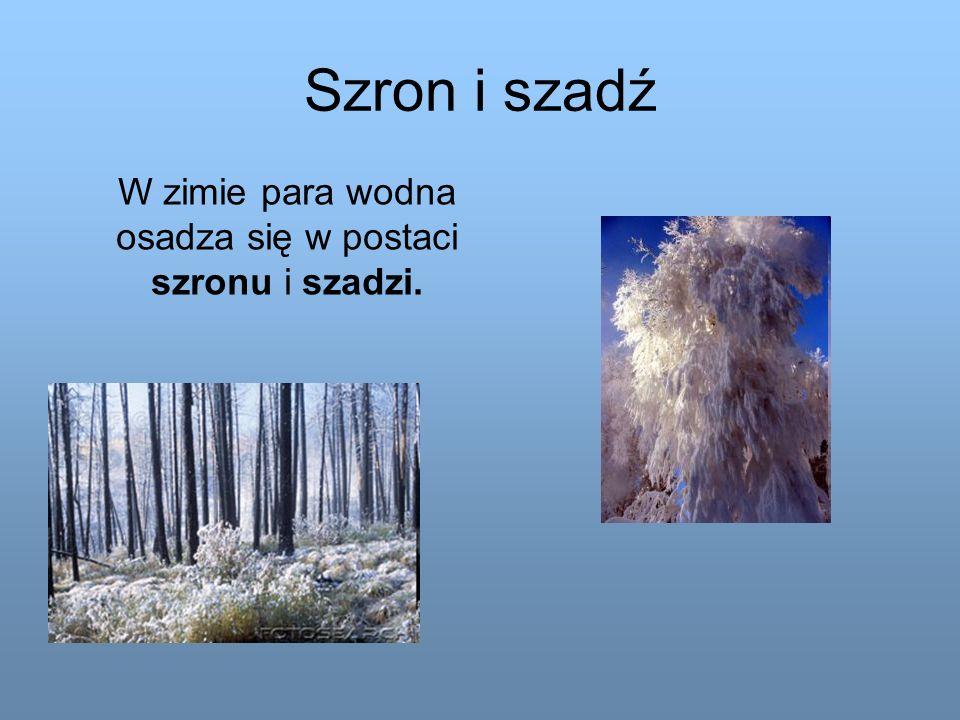Szron i szadź W zimie para wodna osadza się w postaci szronu i szadzi.