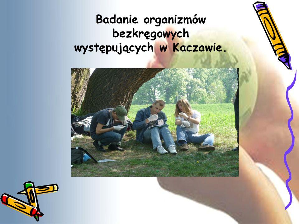 Badanie organizmów bezkręgowych występujących w Kaczawie.