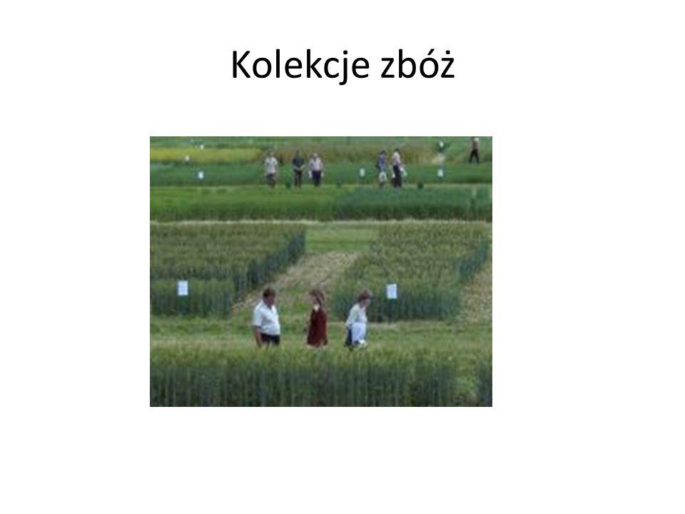 Kolekcje zbóż
