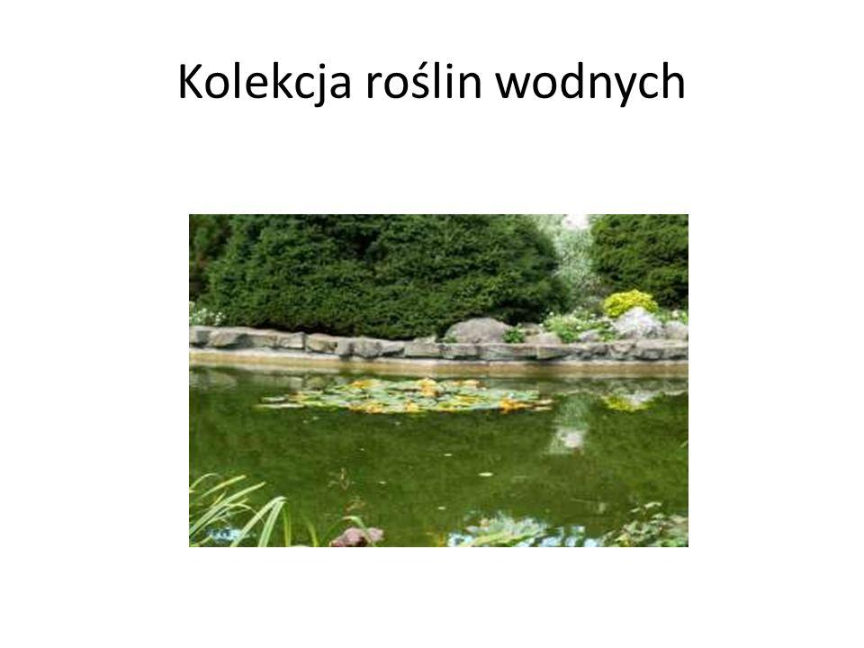 Kolekcja roślin wodnych
