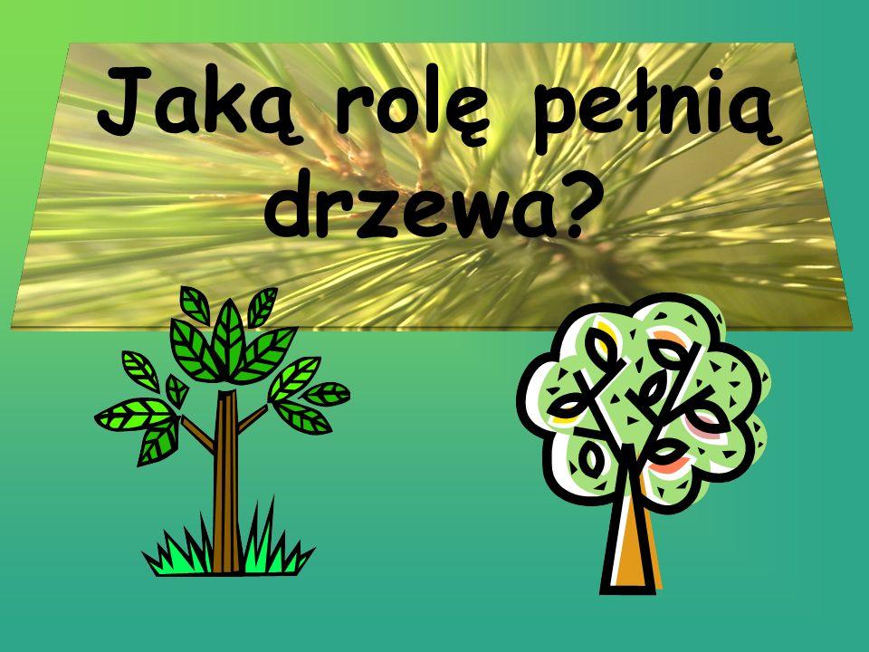 Rośliny zajmują ogromne obszary na powierzchni kuli ziemskiej.