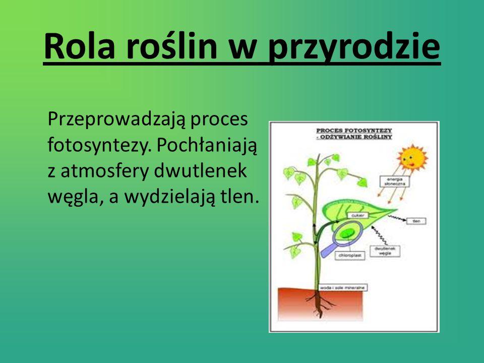 Rola roślin w przyrodzie Przeprowadzają proces fotosyntezy.
