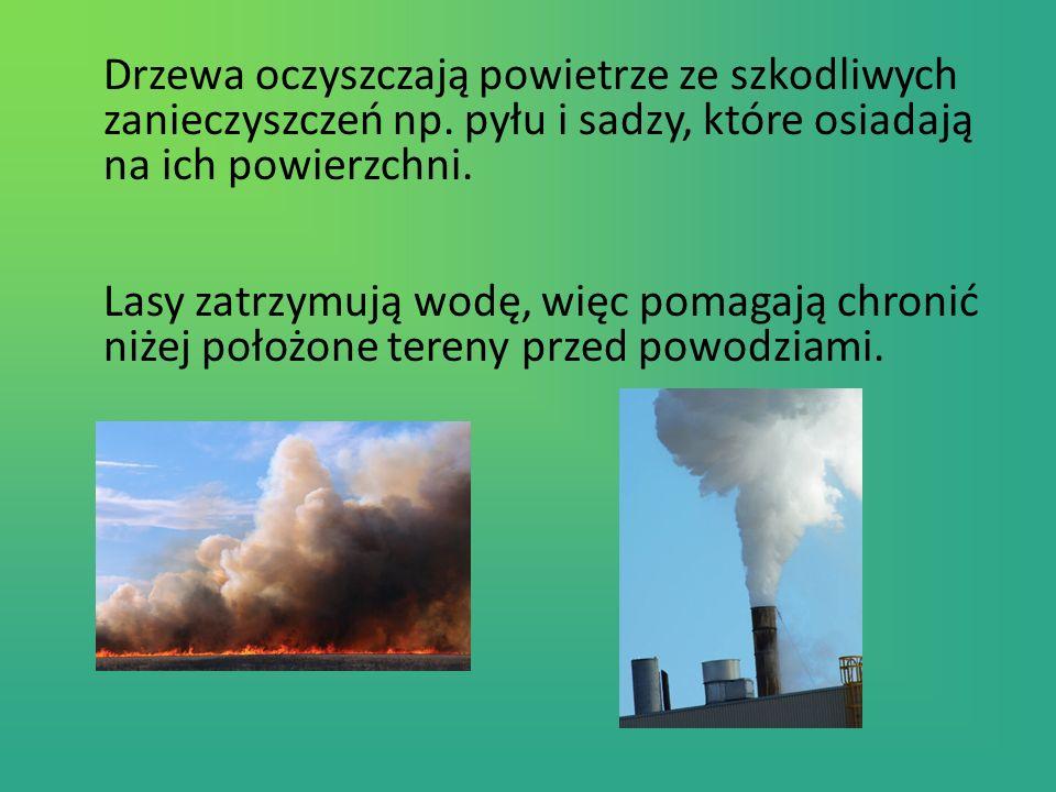 Drzewa oczyszczają powietrze ze szkodliwych zanieczyszczeń np.