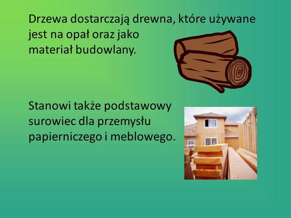 Drzewa dostarczają drewna, które używane jest na opał oraz jako materiał budowlany.