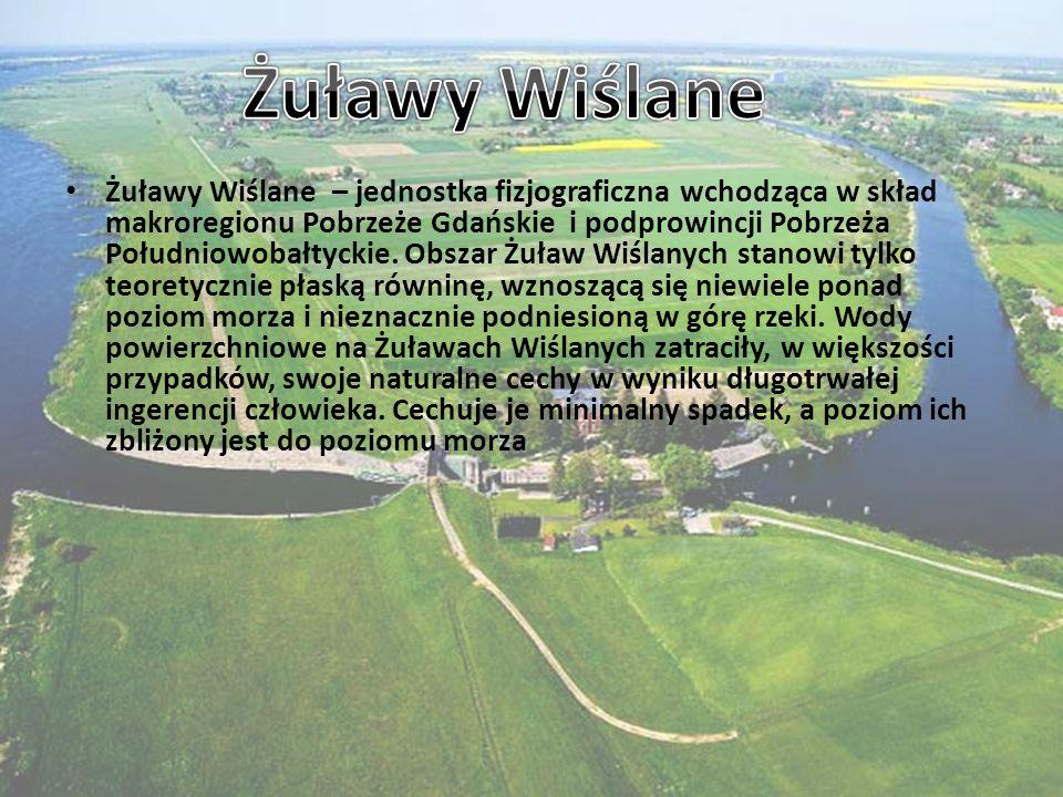 Żuławy Wiślane – jednostka fizjograficzna wchodząca w skład makroregionu Pobrzeże Gdańskie i podprowincji Pobrzeża Południowobałtyckie. Obszar Żuław W