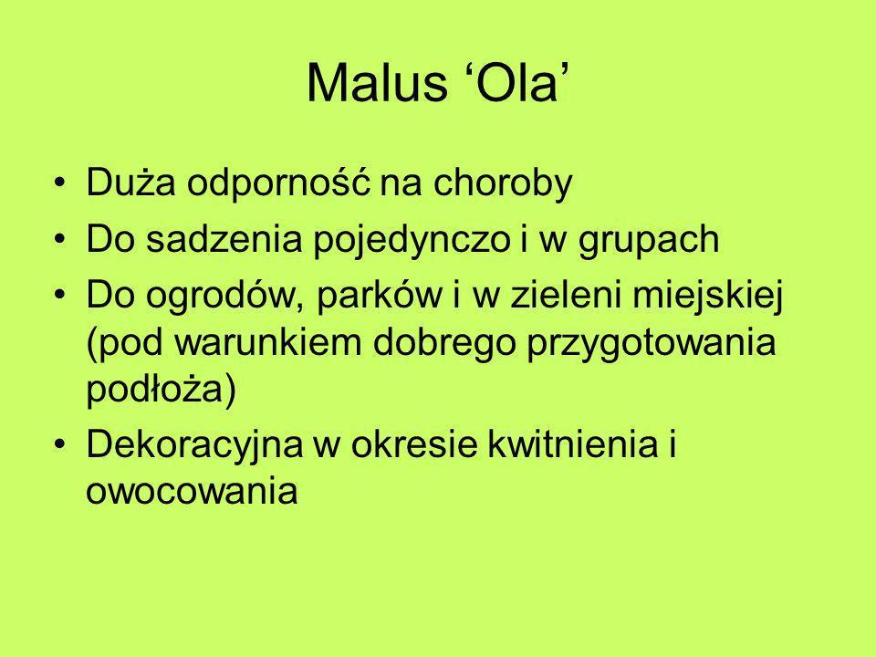 Malus Ola Duża odporność na choroby Do sadzenia pojedynczo i w grupach Do ogrodów, parków i w zieleni miejskiej (pod warunkiem dobrego przygotowania p