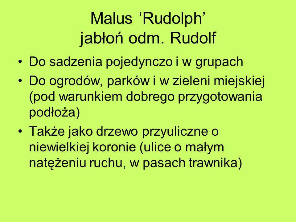 Malus Rudolph jabłoń odm. Rudolf Do sadzenia pojedynczo i w grupach Do ogrodów, parków i w zieleni miejskiej (pod warunkiem dobrego przygotowania podł