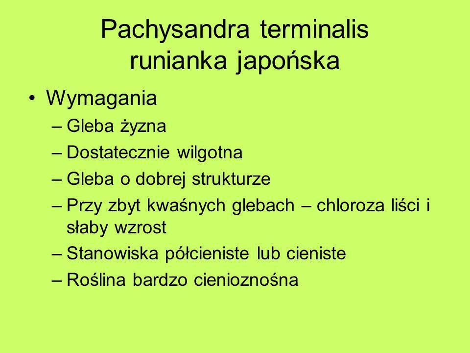 Pachysandra terminalis runianka japońska Wymagania –Gleba żyzna –Dostatecznie wilgotna –Gleba o dobrej strukturze –Przy zbyt kwaśnych glebach – chloro