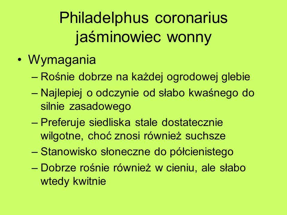 Philadelphus coronarius jaśminowiec wonny Wymagania –Rośnie dobrze na każdej ogrodowej glebie –Najlepiej o odczynie od słabo kwaśnego do silnie zasado