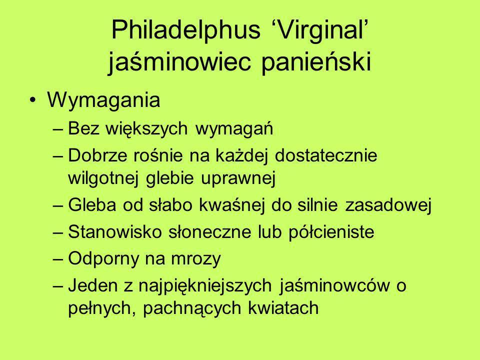 Philadelphus Virginal jaśminowiec panieński Wymagania –Bez większych wymagań –Dobrze rośnie na każdej dostatecznie wilgotnej glebie uprawnej –Gleba od