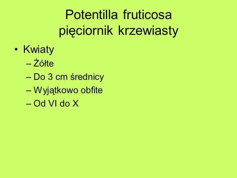 Potentilla fruticosa pięciornik krzewiasty Kwiaty –Żółte –Do 3 cm średnicy –Wyjątkowo obfite –Od VI do X