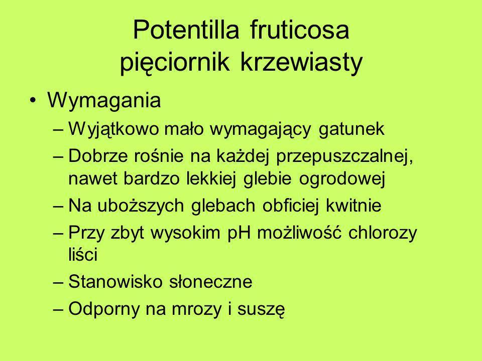 Potentilla fruticosa pięciornik krzewiasty Wymagania –Wyjątkowo mało wymagający gatunek –Dobrze rośnie na każdej przepuszczalnej, nawet bardzo lekkiej