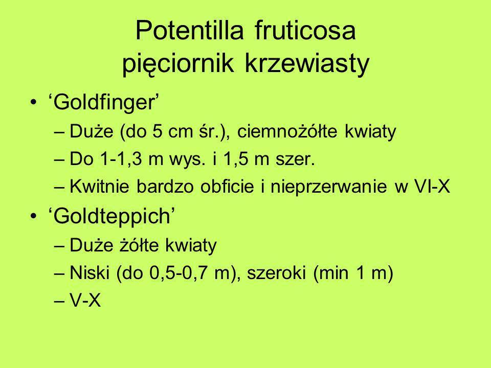 Potentilla fruticosa pięciornik krzewiasty Goldfinger –Duże (do 5 cm śr.), ciemnożółte kwiaty –Do 1-1,3 m wys. i 1,5 m szer. –Kwitnie bardzo obficie i