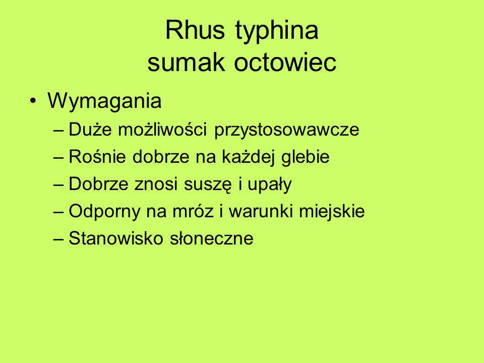Rhus typhina sumak octowiec Wymagania –Duże możliwości przystosowawcze –Rośnie dobrze na każdej glebie –Dobrze znosi suszę i upały –Odporny na mróz i