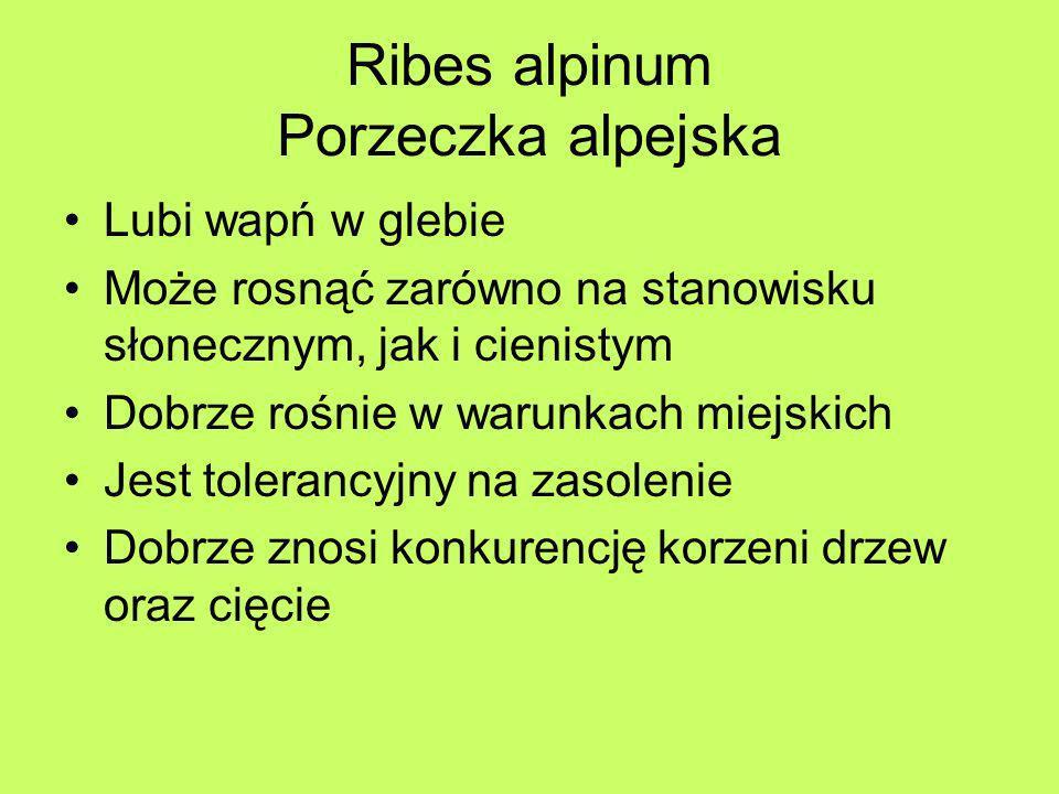 Ribes alpinum Porzeczka alpejska Lubi wapń w glebie Może rosnąć zarówno na stanowisku słonecznym, jak i cienistym Dobrze rośnie w warunkach miejskich