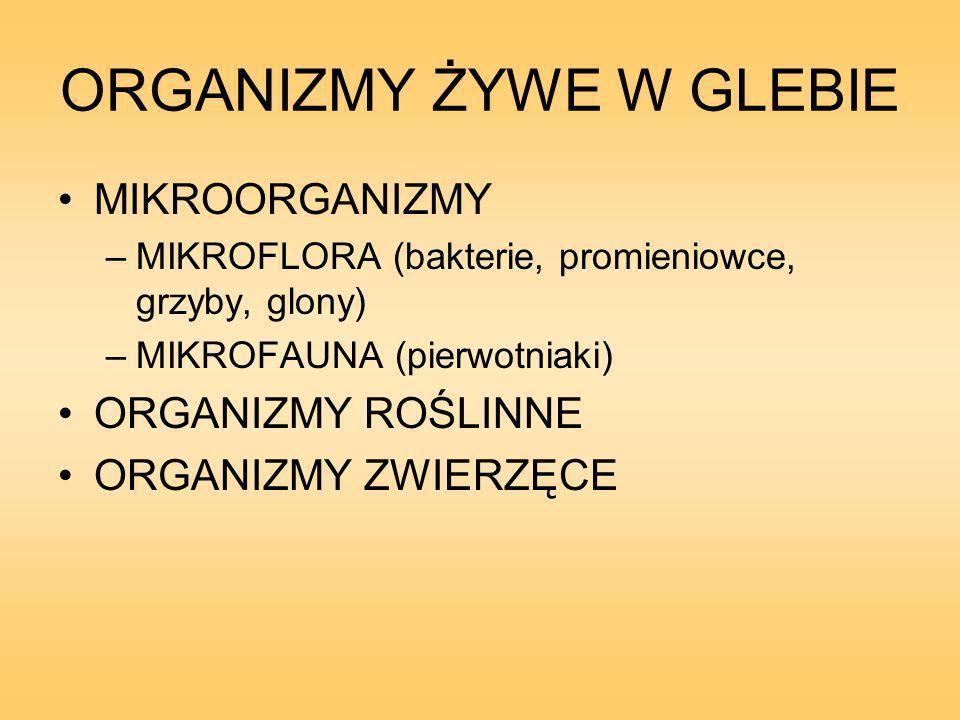 ORGANIZMY ŻYWE W GLEBIE MIKROORGANIZMY –MIKROFLORA (bakterie, promieniowce, grzyby, glony) –MIKROFAUNA (pierwotniaki) ORGANIZMY ROŚLINNE ORGANIZMY ZWIERZĘCE