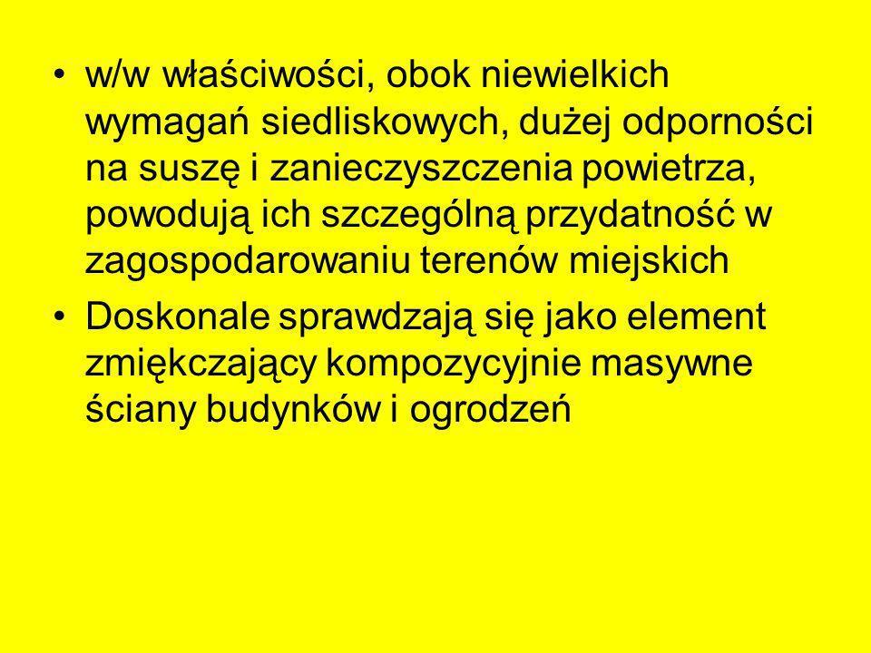 Pnącza wijące się za pomocą pędów w określonym kierunku, gdy napotkają na pionową podporę –Aktinidie (Actinidia sp.) –Cytryniec chiński (Schisandra chinensis) –Dławisz okrągłolistny (Celastrus orbiculatus) –Glicynie (Wisteria sp.) –Hortensja pnąca (Hydrangea anomala) –Kokornaki (Aristolochia sp.) –Milin amerykański (Campsis radicans) –Psianka słodkogórz (Solanum dulcamara) –Wiciokrzewy (Lonicera sp.)