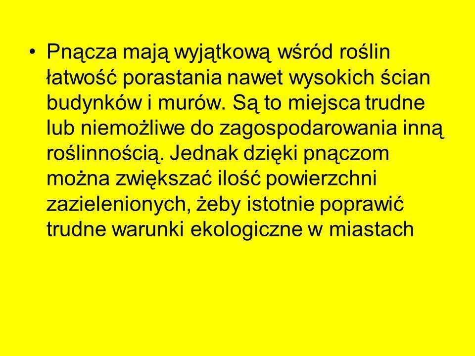 Pnącza o przebarwiających się jesienią liściach –Akebia pięciolistkowa (Akebia quinata) –Aktinidie (Actinidia sp.) –Cytryniec chiński (Schisandra chinensis) –Dławisz okrągłolistny (Celastrus orbiculatus) –Glicynie (Wisteria sp.) –Hortensja pnąca (Hydrangea petiolaris) –Winniki (Ampelopsis sp.) –Winobluszcz (Parthenocissus sp.) –Winorośle (Vitis sp.)
