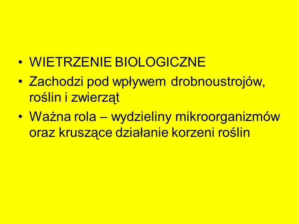 WIETRZENIE BIOLOGICZNE Zachodzi pod wpływem drobnoustrojów, roślin i zwierząt Ważna rola – wydzieliny mikroorganizmów oraz kruszące działanie korzeni