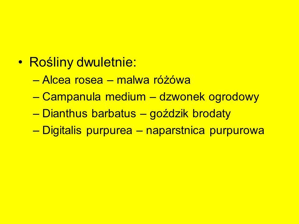 Rośliny wieloletnie niezimujące w gruncie Begonia xtuberhybrida – begonia bulwiasta Canna xgeneralis – paciorecznik ogrodowy Dahlia hybrida – dalia zmienna Gladiolus – mieczyk Fuchsia hybrida – fuksja mieszańcowa Pelargonium xhortorum – pelargonia ogrodowa Pelargonium hederaefolium – pelargonia bluszczolistna