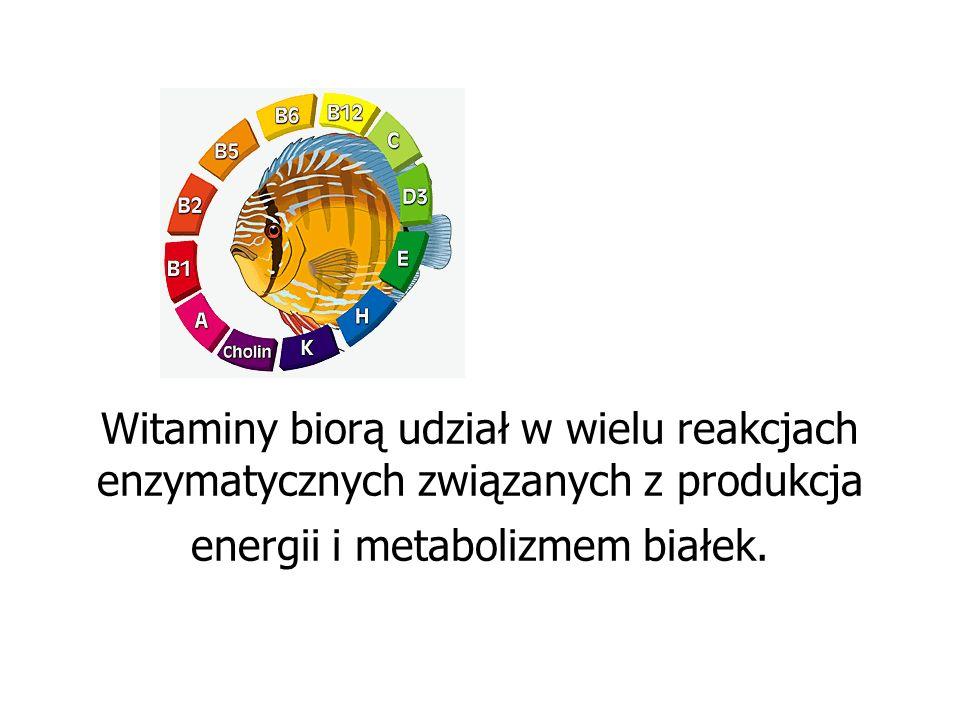 Witaminy biorą udział w wielu reakcjach enzymatycznych związanych z produkcja energii i metabolizmem białek.