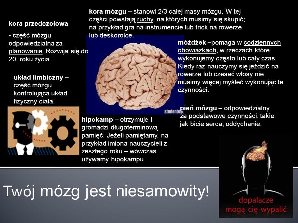 Twó j mózg jest niesamowity ! kora przedczołowa - część mózgu odpowiedzialna za planowanie. Rozwija się do 20. roku życia. kora mózgu – stanowi 2/3 ca