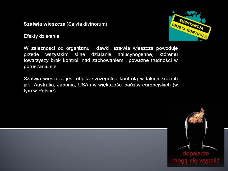 Szałwia wieszcza (Salvia divinorum) Efekty działania: W zależności od organizmu i dawki, szałwia wieszcza powoduje przede wszystkim silne działanie ha