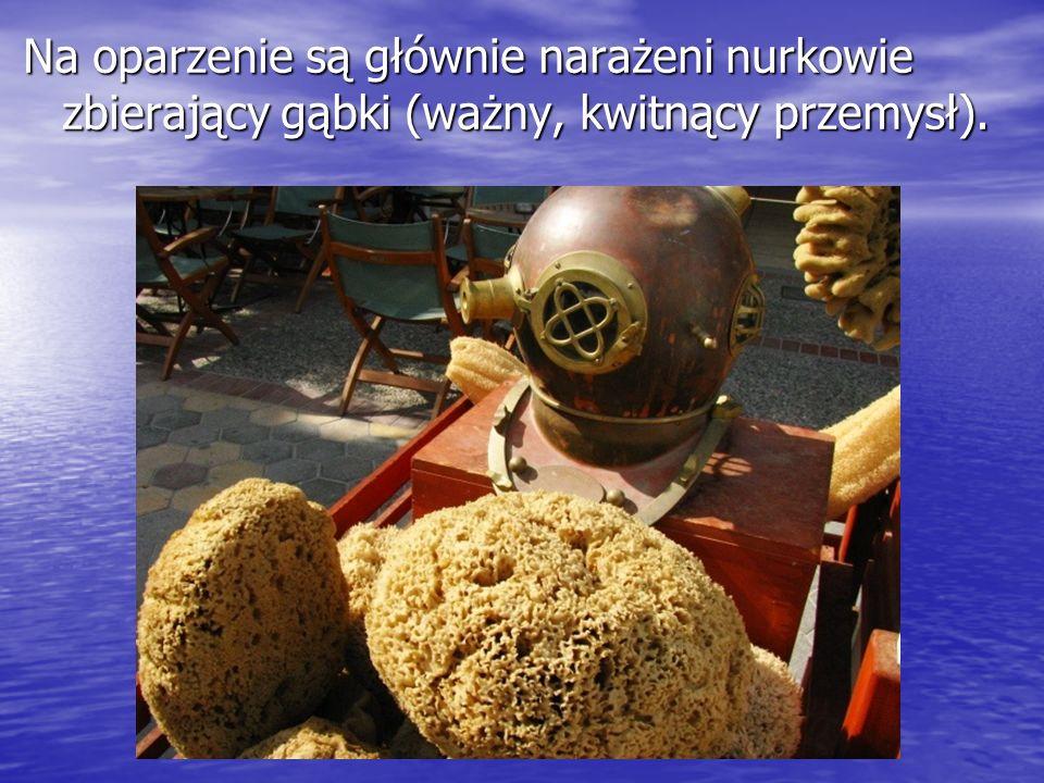 Na oparzenie są głównie narażeni nurkowie zbierający gąbki (ważny, kwitnący przemysł).