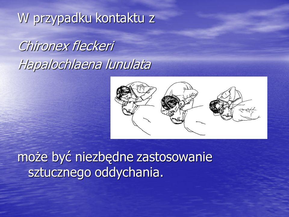 W przypadku kontaktu z Chironex fleckeri Hapalochlaena lunulata może być niezbędne zastosowanie sztucznego oddychania.