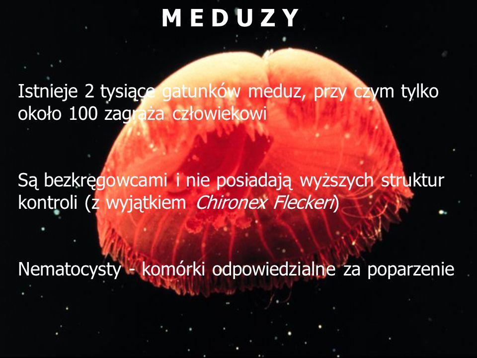 M E D U Z Y Istnieje 2 tysiące gatunków meduz, przy czym tylko około 100 zagraża człowiekowi Są bezkręgowcami i nie posiadają wyższych struktur kontro