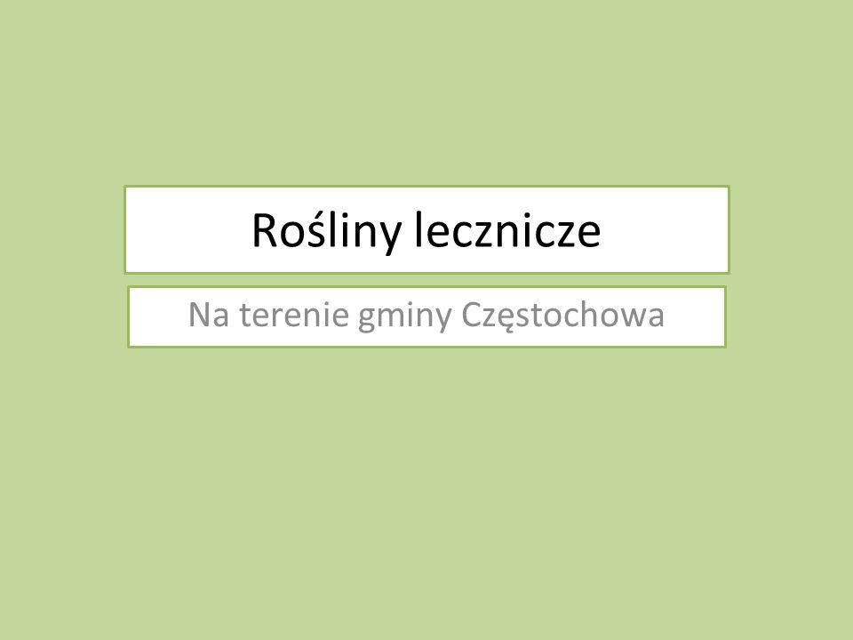 Rośliny lecznicze Na terenie gminy Częstochowa
