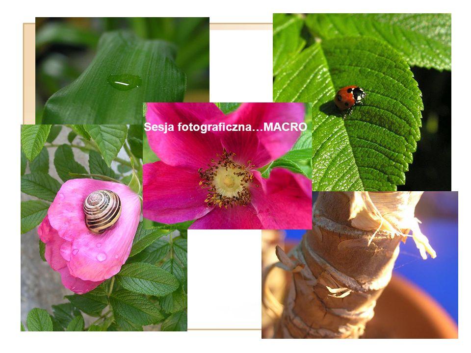 Sesja fotograficzna…MACRO