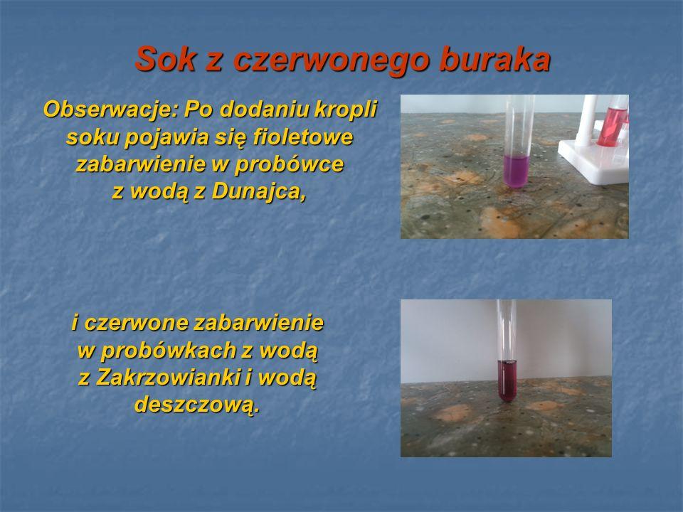 Sok z czerwonego buraka Obserwacje: Po dodaniu kropli soku pojawia się fioletowe zabarwienie w probówce z wodą z Dunajca, i czerwone zabarwienie w pro