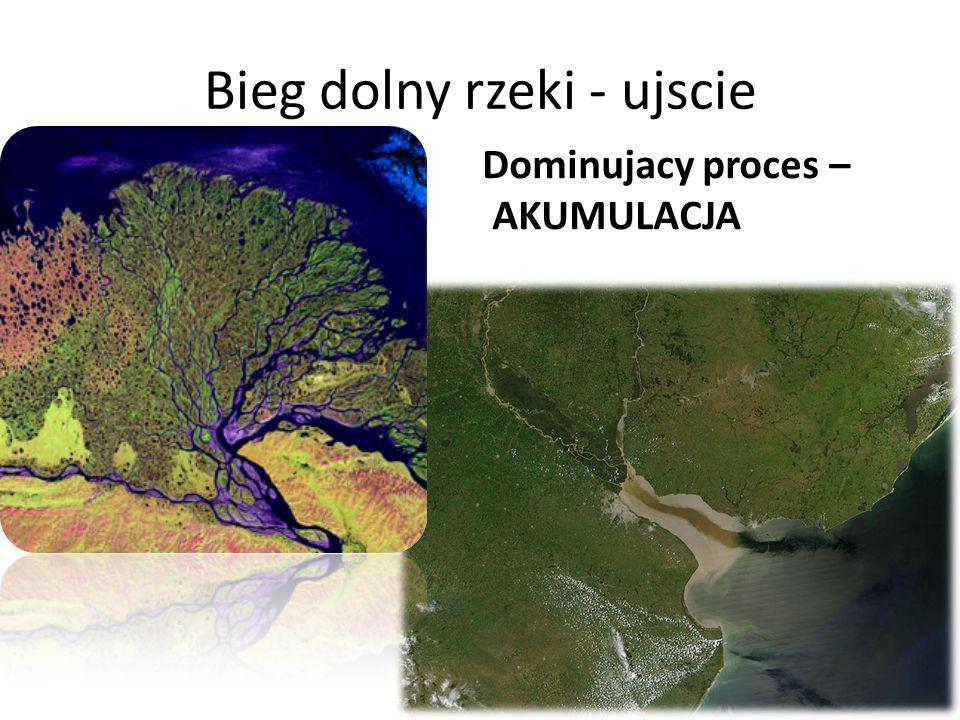 Bieg dolny rzeki - ujscie Dominujacy proces – AKUMULACJA