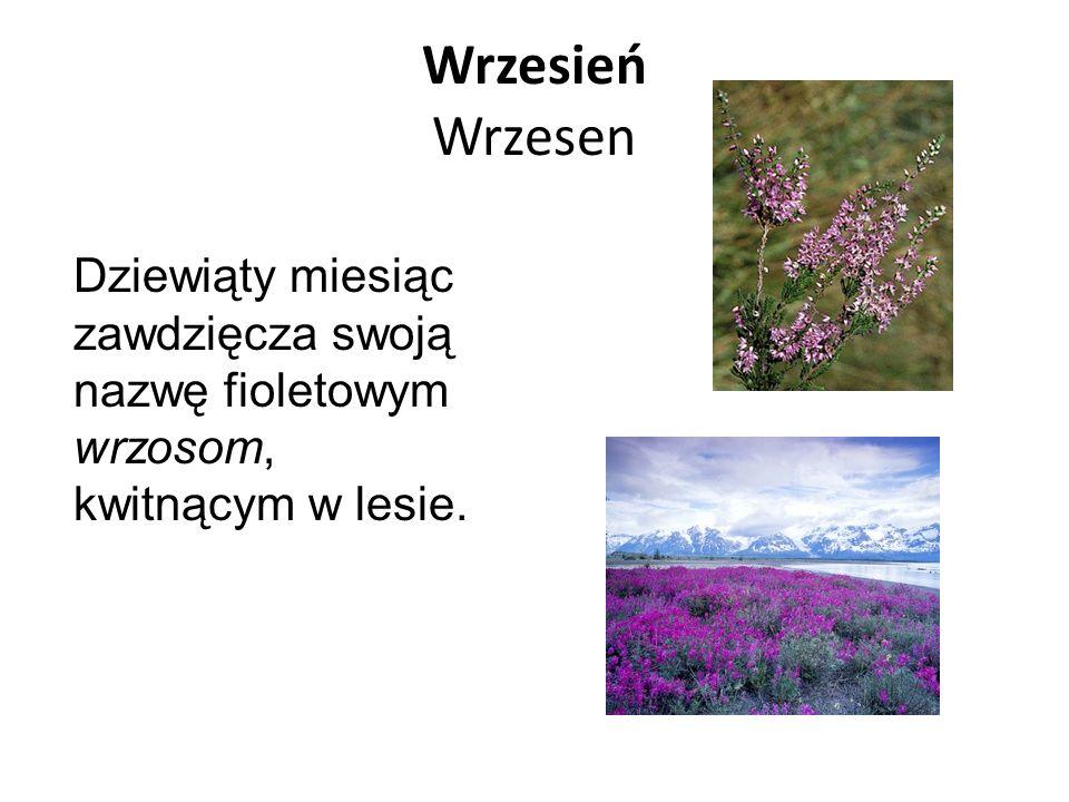 Wrzesień Wrzesen Dziewiąty miesiąc zawdzięcza swoją nazwę fioletowym wrzosom, kwitnącym w lesie.
