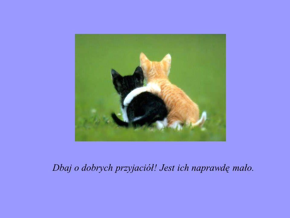 Kochaj przyjaciół, bez względu na to, kim są.