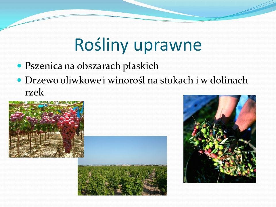 Rośliny uprawne Pszenica na obszarach płaskich Drzewo oliwkowe i winorośl na stokach i w dolinach rzek