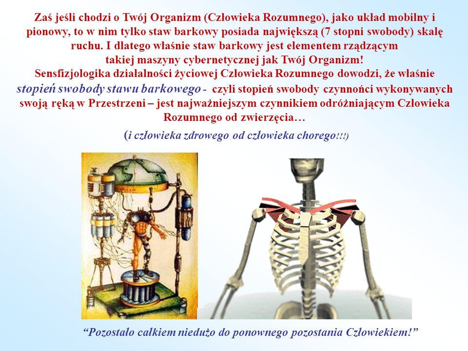 Zaś jeśli chodzi o Twój Organizm (Człowieka Rozumnego), jako układ mobilny i pionowy, to w nim tylko staw barkowy posiada największą (7 stopni swobody