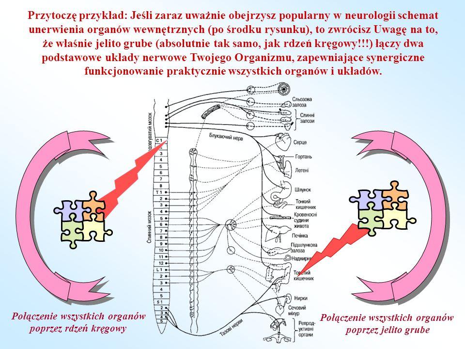 Na schemacie dobże pokazano, jak jedna z gałęzi nerwowych prowadzi do jelita grubego od góry, od rdzenia kręgowego, jest to błędny nerw.