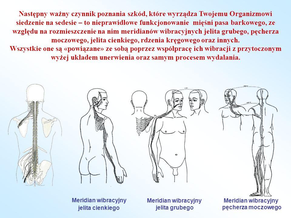 Następny ważny czynnik poznania szkód, które wyrządza Twojemu Organizmowi siedzenie na sedesie – to nieprawidłowe funkcjonowanie mięśni pasa barkowego